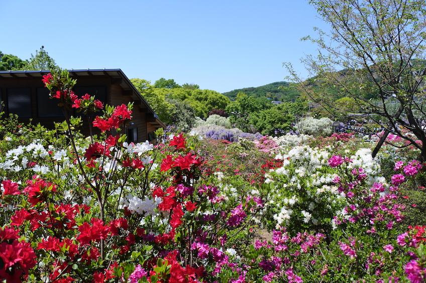 nikko le parc ashikaga paradis des glycines. Black Bedroom Furniture Sets. Home Design Ideas